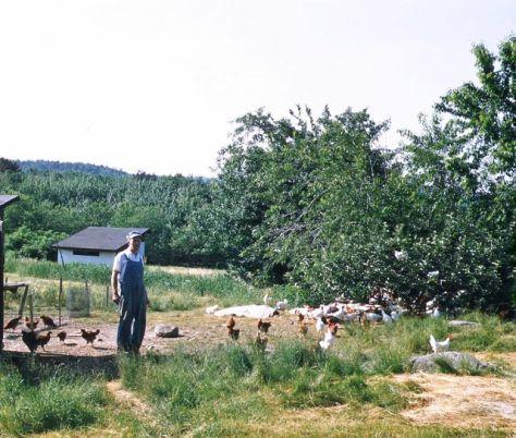 grandpaw:chickens