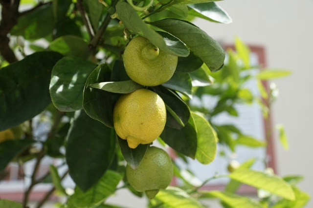 lemon-793906_1280