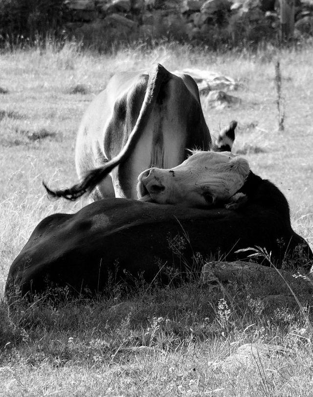 Photo by farm intern Anja Semanco, 2012.