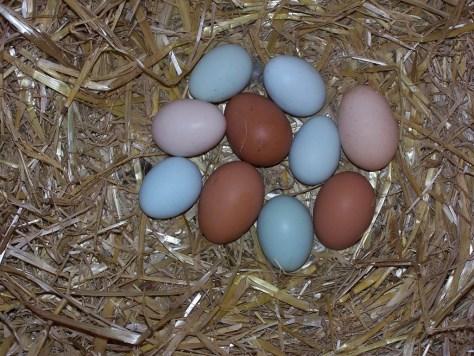 egg-752274_1280
