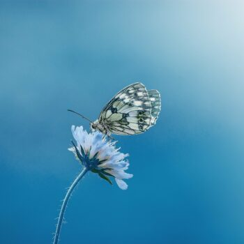 butterfly-1611794_1920