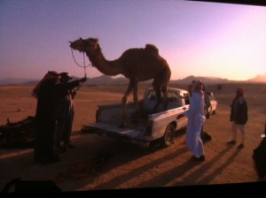 [15 words or less poems]  Where Would You Like This Camel Delivered?