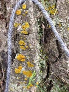 Lichen [15 words or less]