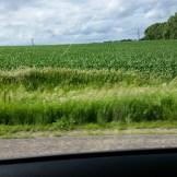 A farmland drive