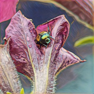 Beetle [15 Words or Less]