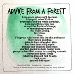 Advice from a Forest