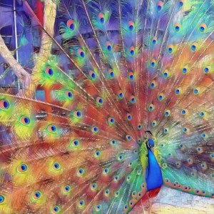 Peacock [15 Words or Less]