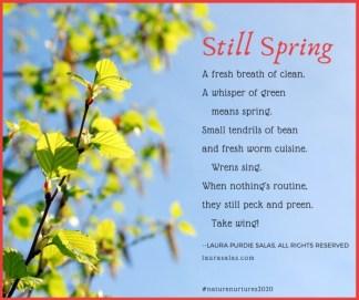 Still Spring