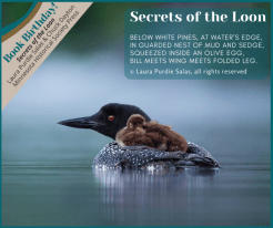 secrets of the loon book birthday