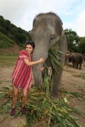 elephantjungle5