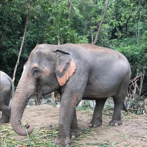 elephantjungle8