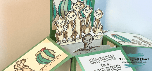 Meerkat pop up box