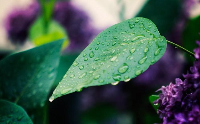 rainyday02