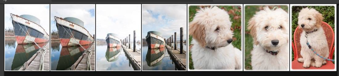 Lightroom CC - Which Are Selected?