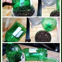 Make your own Mini Greenhouses - DIY for Seedlings