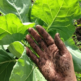 8 Results Of Reconnecting With Our Food Source