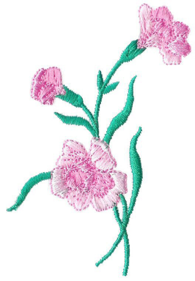 Carnations - No. 5