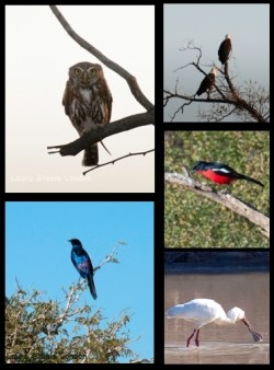 The diversity of birdlife is striking - we even saw a Pearl Spotted Owl!