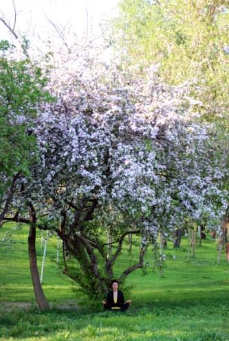 The Wisdom Tree, in Bloom