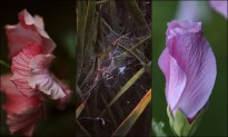 pageblumen