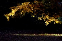 heute abend im Park