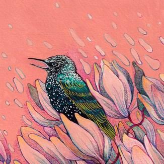 Laura Su Art + Illustration Store