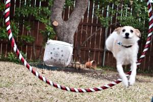 Sadie: squirrel hunter, taste tester, scrap picker upper