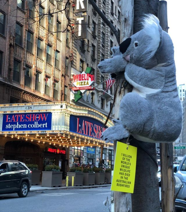 koalas of nyc