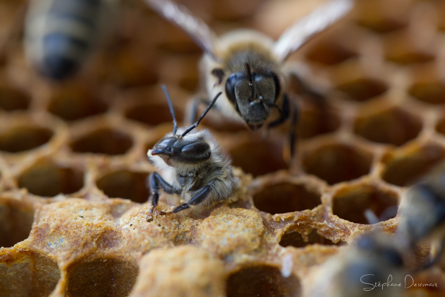 Bee-Wraps, WTF?