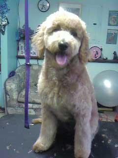 Cute Photos Of Happy Clients Laurels Pet Grooming