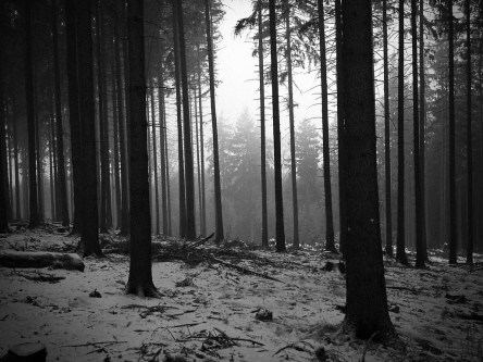 black-and-white-landscapes-trees-forest-monochrome-1024x768-wallpaper