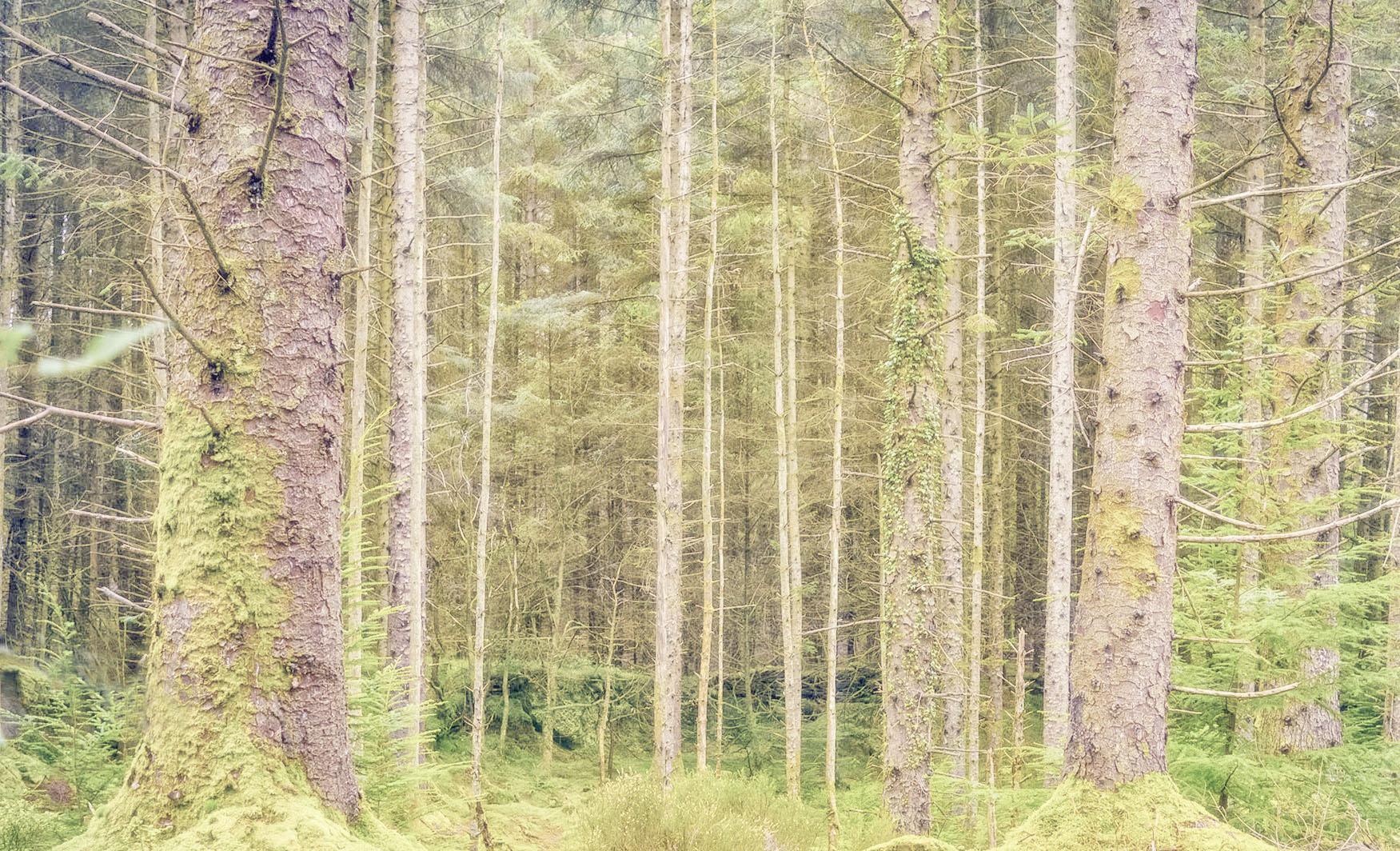Gwydyr Forest