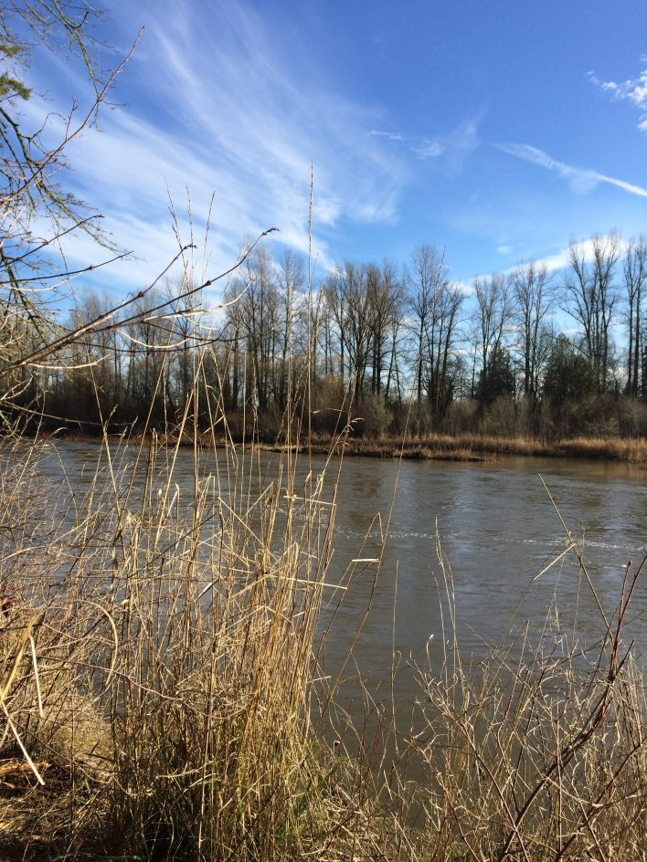 The south end of the trail offers views of the confluence of the Skookumchuck and Chehalis rivers.