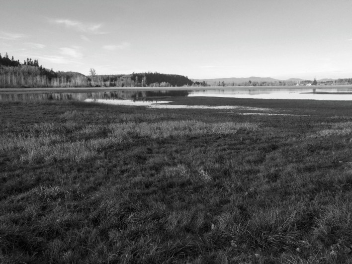 In black and white, different grasses stand out in the foreground.