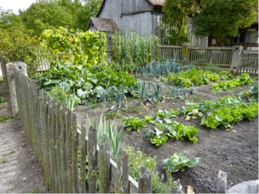 Guide to Beginner Gardening