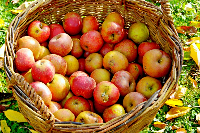 apple basket (1)
