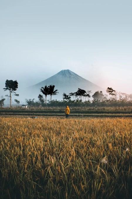 Mount Bromo, Indonesia by Ifan Bima