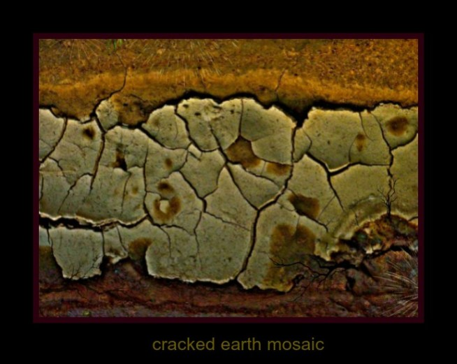 cracked earth mosaic
