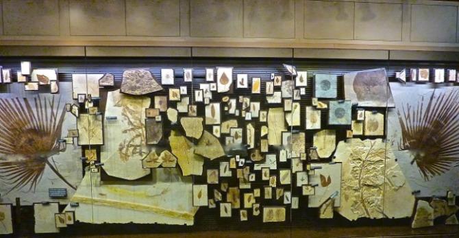 fossils: good impressions