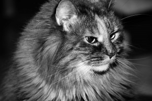 Lucy_BW-300x200