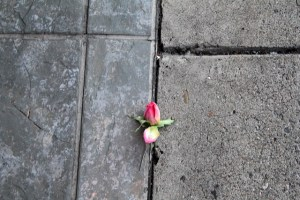 flower thru concrete
