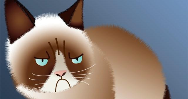 sad cat image
