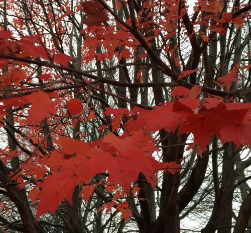 """rox-leaves5""""_0608"""
