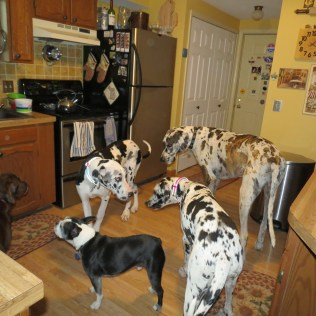 Five in the kitchen