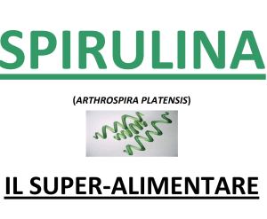 spirulina in italiano