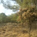 Chêne Séché