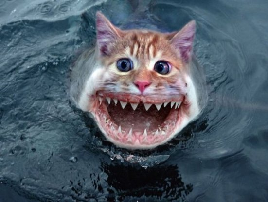 Photo manipulations of Shark Faces