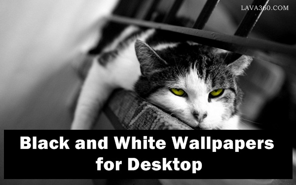 Black and White Wallpapers for Desktop1.1