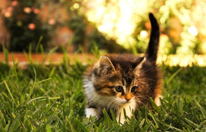 Pictures of Cute Kittes (10)