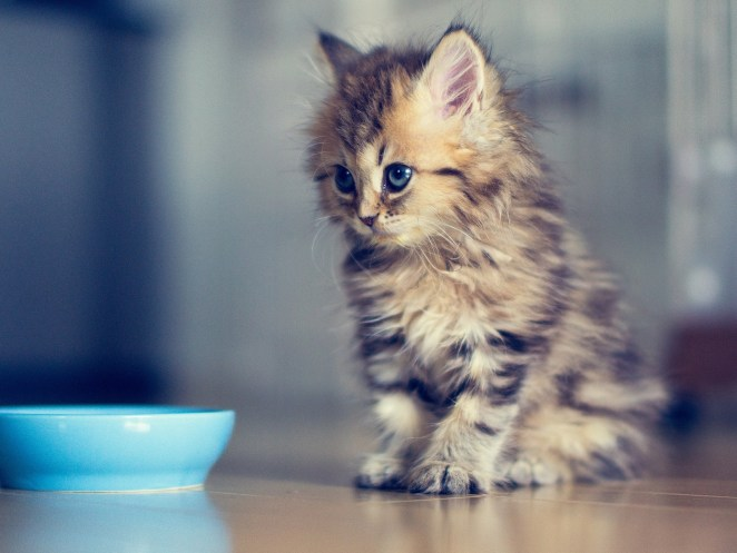 Pictures of Cute Kittes (21)